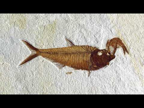 Fossil Animals and Fishes