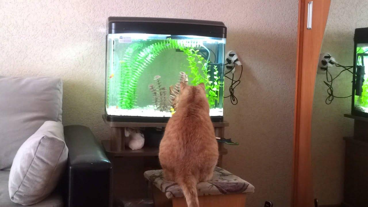 Фото кота за аквариумом