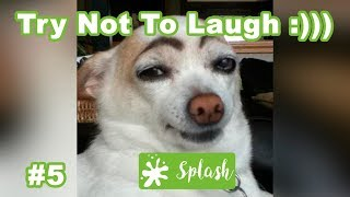 Try Not To Laugh Challenge, Silly Dogs and Funny Animal Videos, Animal Fail Compilation, #5
