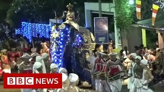Sri Lanka elephant runs amok in parade - BBC News