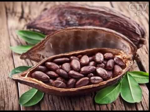 Семена чиа состав, польза, полезные свойства, применение