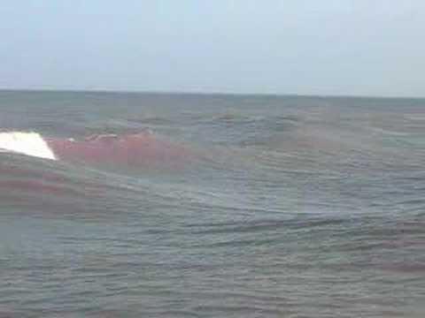 Delfines en la Playa de Miramar Tampico Mexico