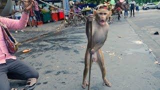 बंदर का खेल.Funny Monkey Drama Video.Madari aur Bandar ka khel.Bandar ka Tamasha