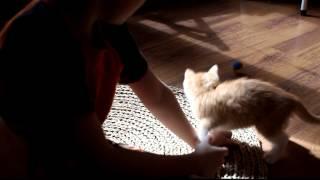 видео Как отучить котенка кусаться и царапаться - 10 советов