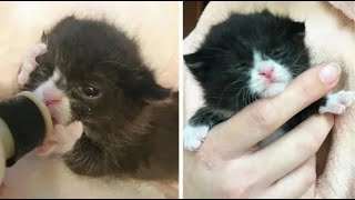 Крохотный котенок до последнего боролся за жизнь, и в награду получил преданного друга