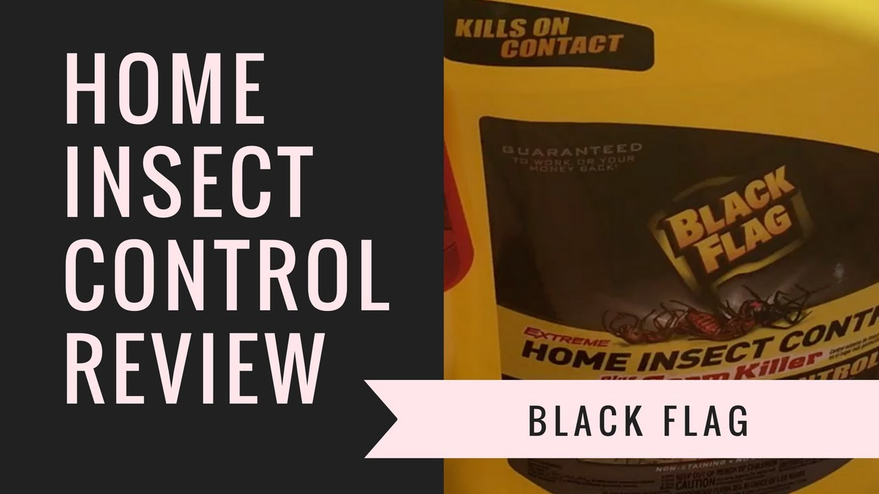 black flag extreme home insect control review youtube