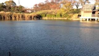 蛇池(信長の伝説地)