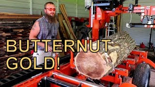 IN ALL MY YEARS OF SAW-MILLING I HAVE NEVER SEEN A LOG LIKE THIS BEFORE, PRIZE BUTTERNUT!