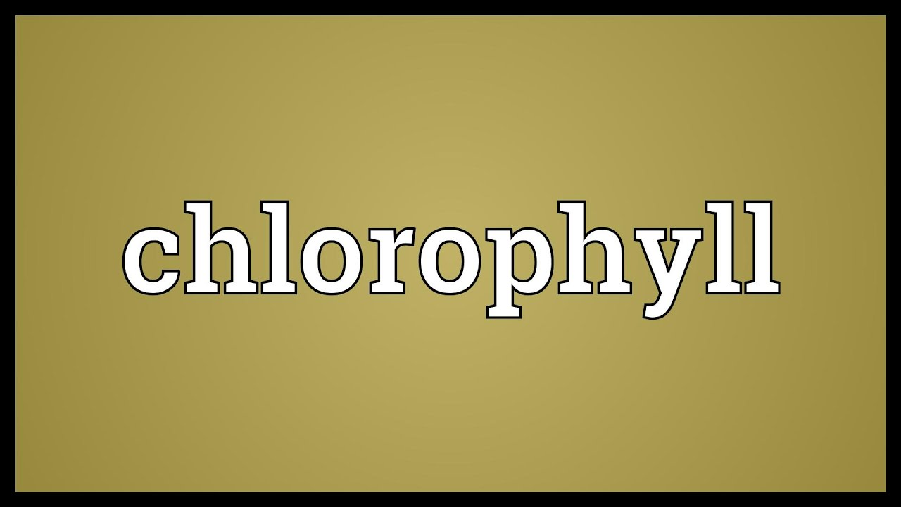 Chlorophyll Meaning