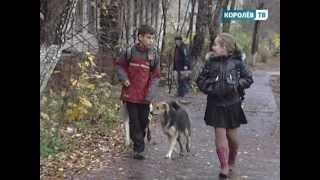 Королёв — в зоне отчуждения(Губернатор подмосковья ввёл ветеринарный карантин в нашем городе, а также в Юбилейном и Загорянке. Врачи..., 2012-09-07T15:56:43.000Z)
