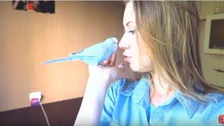 VLOG: Мои волнистые попугаи Тоша и Лайма