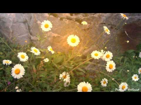 30 Minutes of Melancholic Healing Cello Piano Harp Music (Instrumental Music)
