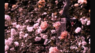Arc Gotic - In my Ruined Rosegarden