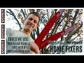 HOME FIXERS: How to cut down a tree with a reciprocating saw