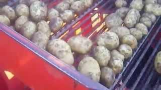 Potato Harvesting 3 / Vadjenje krompira #