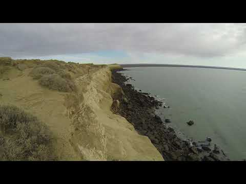 Phonography : Sea Lions Colony - Argentina (-49.160139, -67.617528)