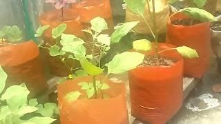 terrace farming in kottayam vadavathoor