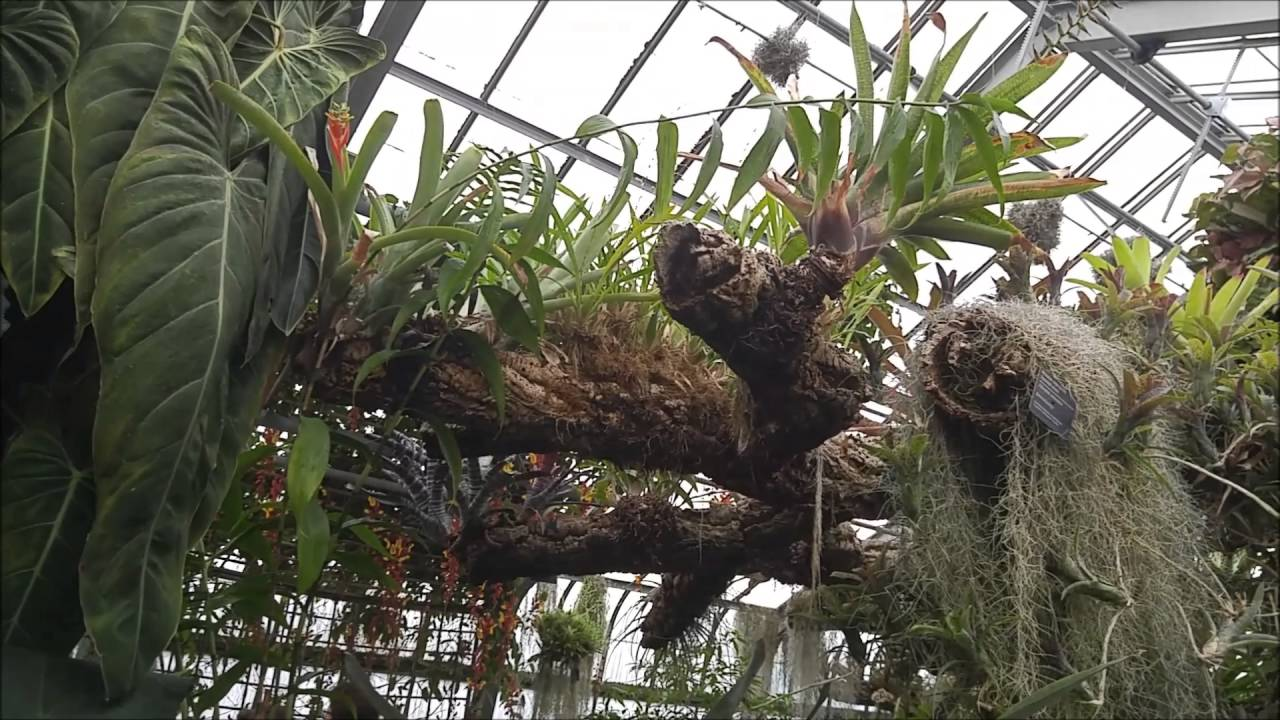 Montreal botanical garden greenhouse july 2016 part 1 montreal botanical garden greenhouse july 2016 part 1 epyphites youtube publicscrutiny Image collections