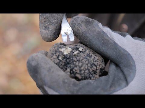 Jag åkte till Gotland och grävde upp tryffel