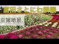 4k絶景 Drone Japan【ゆったりコスモス】富田さとにわ耕園 空撮 ドローン初公開