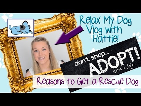 adopt-don't-shop!-reasons-for-getting-a-rescue-dog!