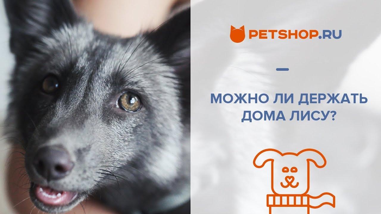 По мнению некоторых зоологов, фенека следует относить не к роду лисиц, от которых он отличается по целому ряду признаков, а к отдельному роду.