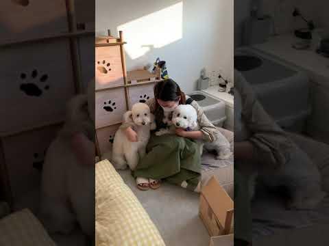 Download 갑자기 혼날때 강아지들의 반응