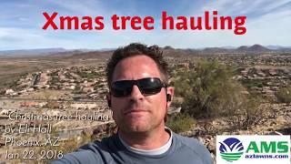 Christmas Tree Disposal Service for Phoenix, AZ