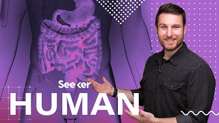 Download How Your Digestive System Fights Pathogens