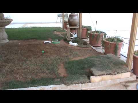 حديقه سطح البيت