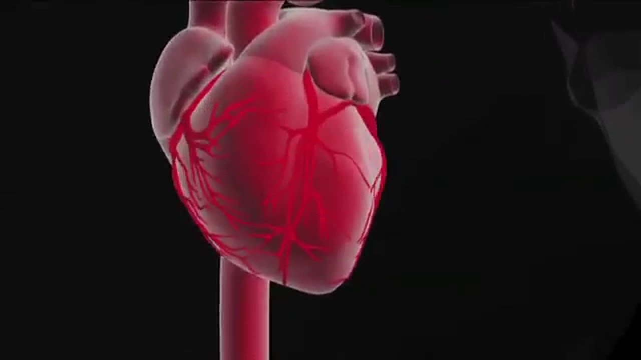 Role and function of the heart - YouTube