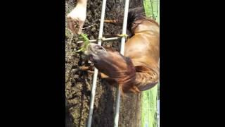 草を食べる馬の顔がめちゃくちゃおもろい!