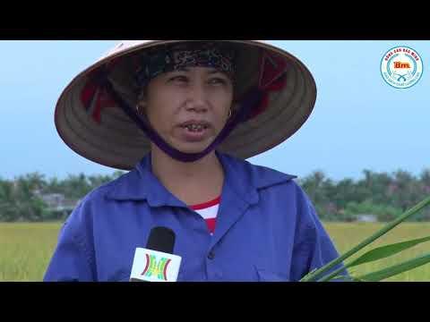 Người nông dân chia sẻ về sự hợp tác với Gạo Bảo Minh