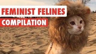 Feminist Felines | Funny Cat Video Compilation 2017