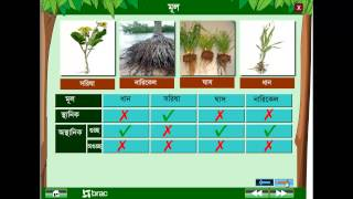 General Science : Morphology of plant 1