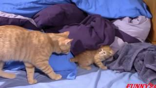 Происхождение и одомашнивание кошек Spaß Katzen