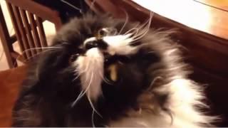 Реакция кота на мороженное   Cat's reaction on ice cream
