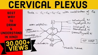 CERVICAL PLEXUS ...made easy...✌️With Simple diagram