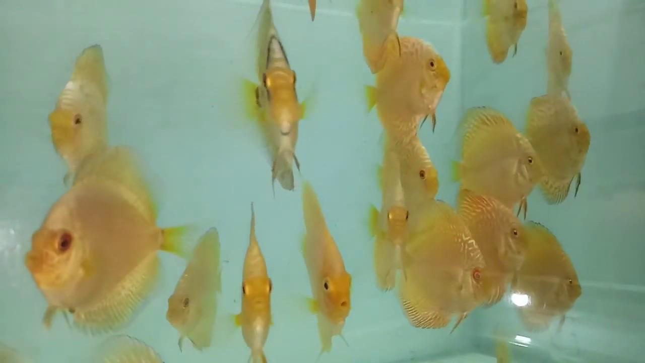 Fish aquarium in kurla - Aquarium Fishes For Sale Mumbai 9833898901