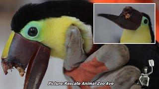 Toucan's beak broken after teenagers beat it with sticks