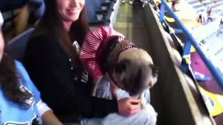 Dogs have their day at Admirals game