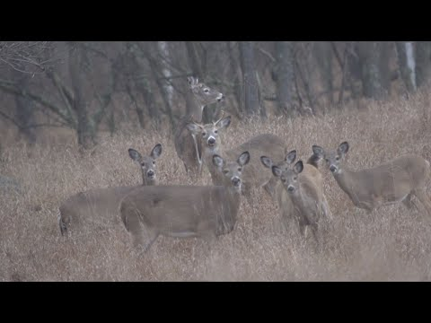 Not Every Hunting Show Has a Happy Ending - Destination Whitetail, Full Episode