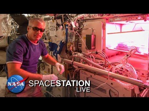 Astronautas ya pueden comer lechuga cultivada en el espacio