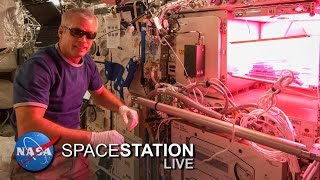 Space Station Live: Lettuce Look at Veggie