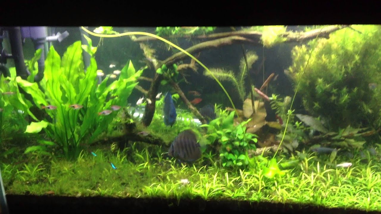 Black Beard Algae Issues 1080p Youtube