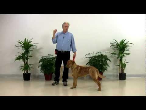 Dog Training Chesapeake Bay Retriever - Doc 001