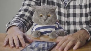 Aaron's Animals NEW VIDEO COMPILATION    FunnyVines