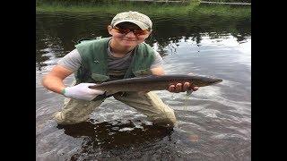 Atlantic Salmon Dry Fly Fishing