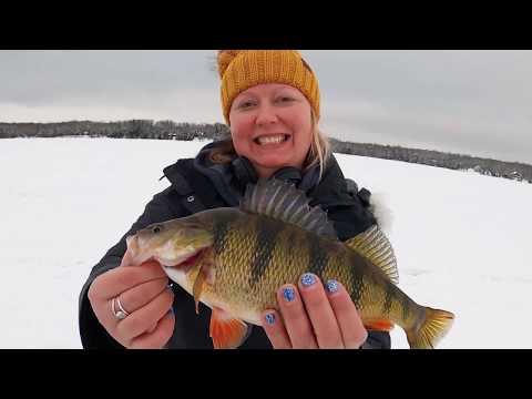 Discovering - Perch Fishing Lake Gogebic