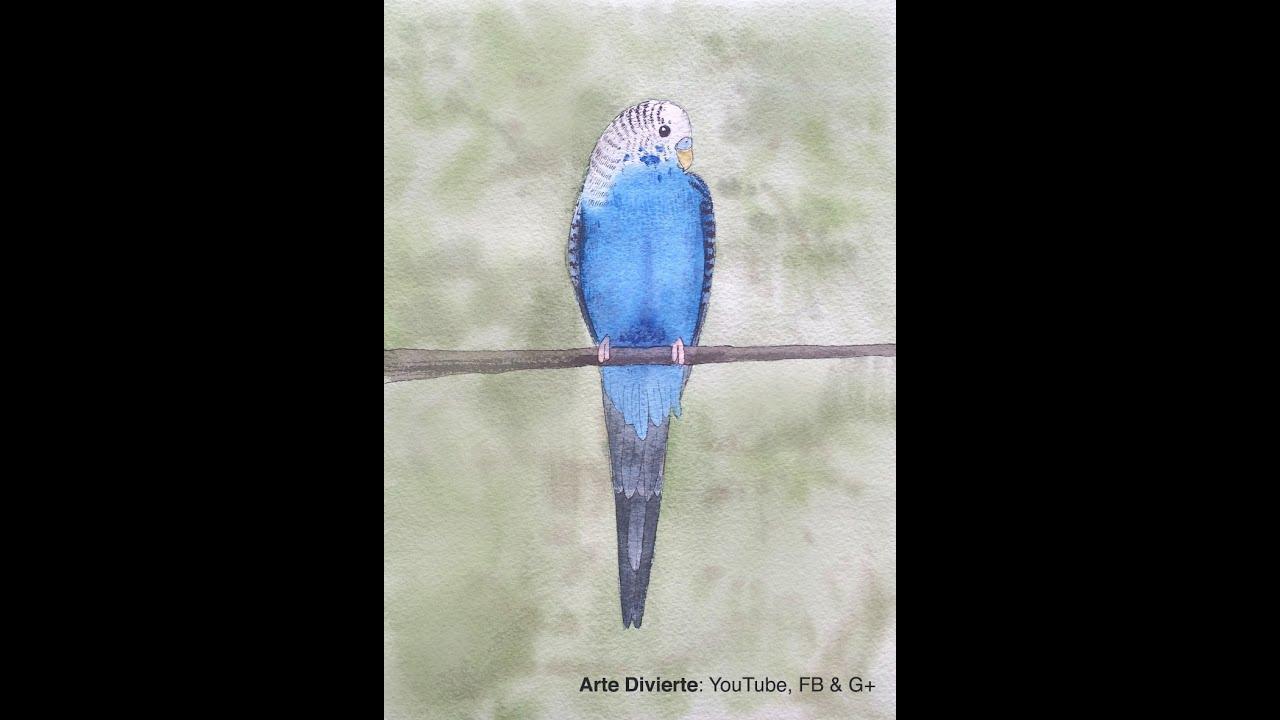 Cmo pintar un periquito australiano a la acuarela  YouTube